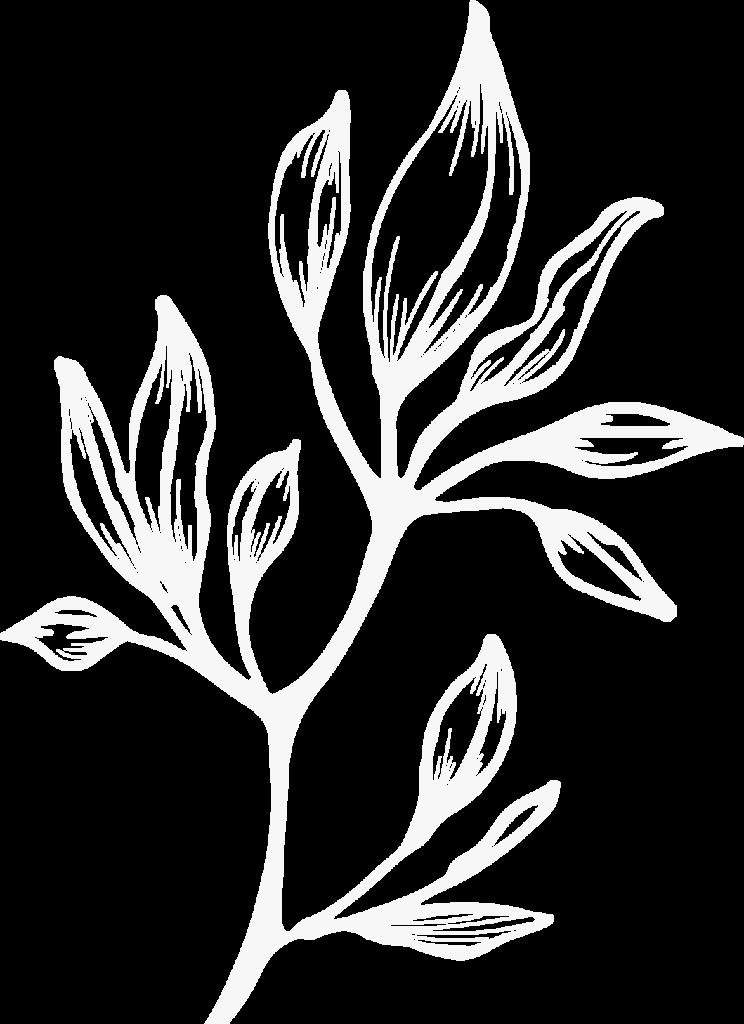 hero - plant 1
